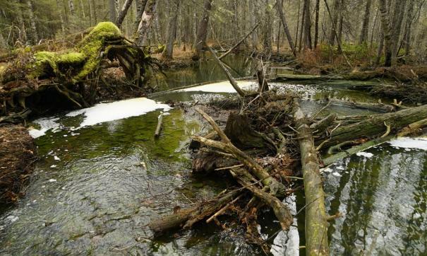 Экологи выявили в реке Тамшер превышение норм меди в 60 тысяч раз