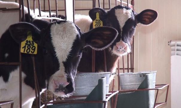 С 1 января 2012 года вся молочная продукция должна будет проходить обязательную маркировку