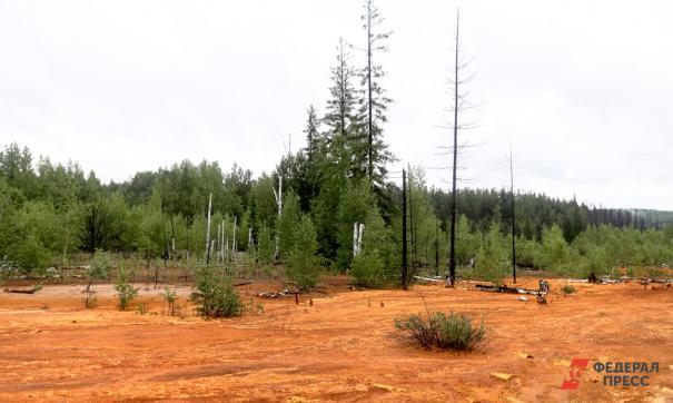 Загрязненный мазутом участок находился в лесу