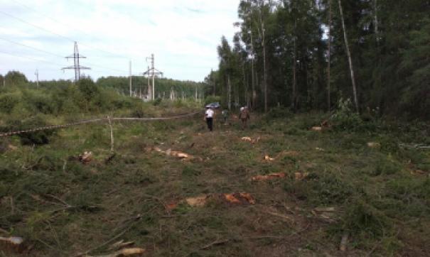 В Асбесте в суд передано дело о незаконной вырубке деревьев