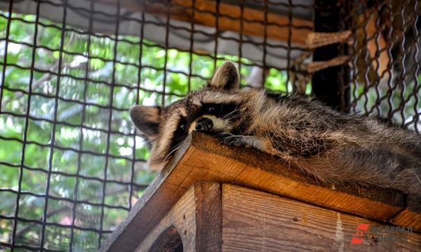 Животных передадут в специализированные приюты