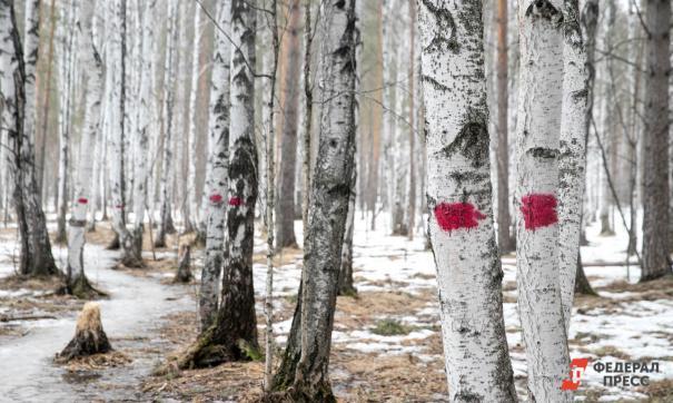 Партия «Единая Россия» внесла поправки в Лесной кодекс