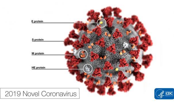 Ученые из ЮАР обнаружили новую мутацию коронавируса