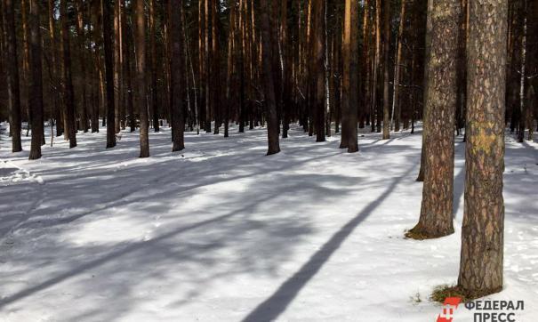 Суд отправил на пересмотр дело о границах бора в Челябинске