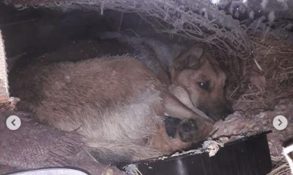В Комсомольске-на-Амуре ищут подростков из-за убийства щенков