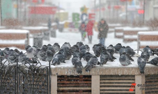 В Сибири идут суровые морозы
