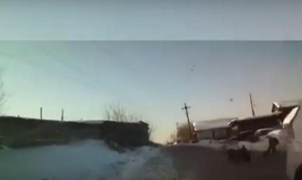 Водитель автомобиля направил машину в стаю и разогнал агрессивных животных