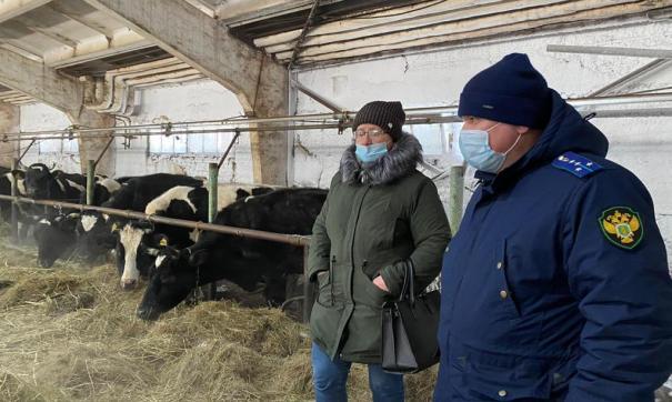 На ферму, где содержат депутатское стадо, нагрянули прокуроры