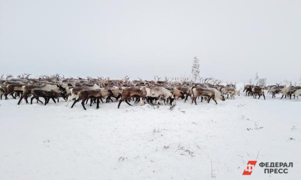 Проект проводится в рамках Национального проекта «Экология» совместно с Министерством природных ресурсов и экологии РФ
