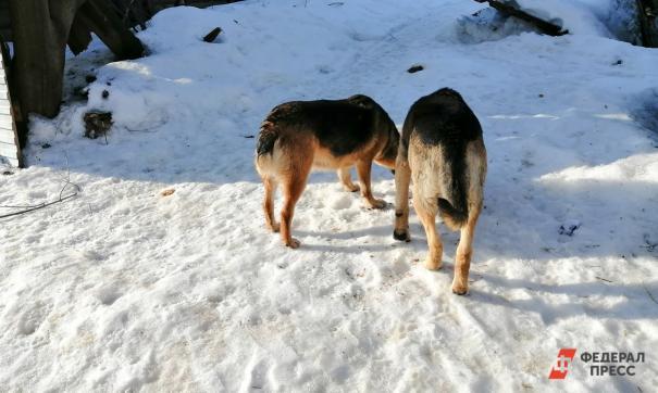 Как решить проблему бездомных собак: ответ приморского зоолога