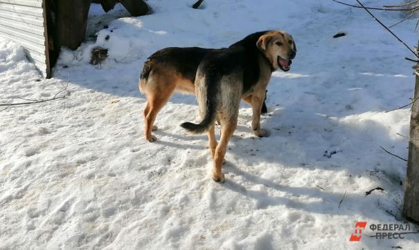 Уголовное дело возбудили в отношении новокузнецких чиновников, не организовавших отлов бездомных животных