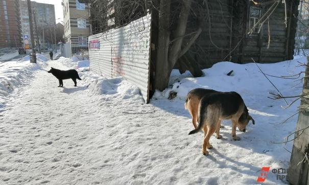 Депутат горсовета считает, что агрессивных собак надо усыплять