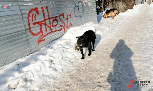 В Новокузнецке стая собак напала на школьницу