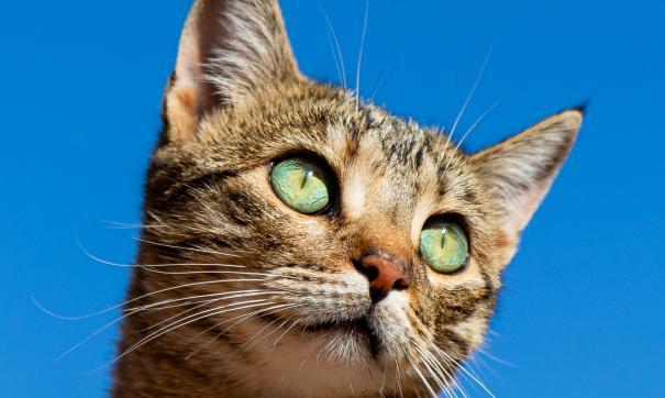 В Великобритании из-за упрямой кошки задержали скоростной поезд