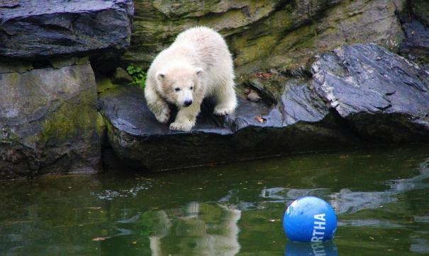 В ростовском зоопарке медвежонок вышел к посетителям