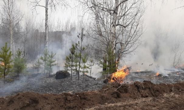 В Забайкалье тушат лесные пожары в восьми районах