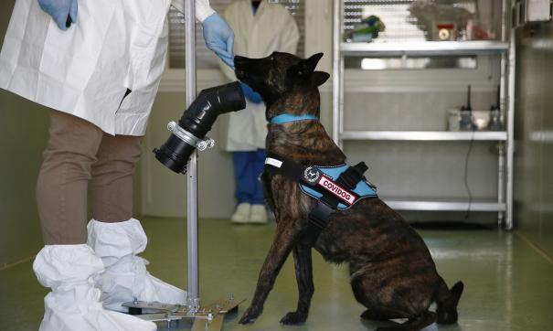 Ученые пообещали научить собак определять целый спектр заболеваний