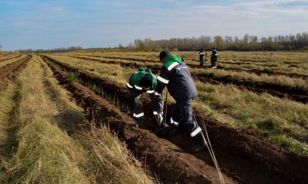 Волонтеры компании высадили 17 тысяч молодых деревьев