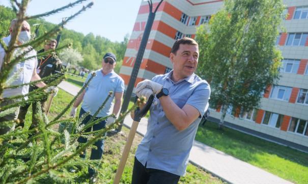 Евгений Куйвашев посадил несколько елей у ДГБ №9 в Екатеринбурге