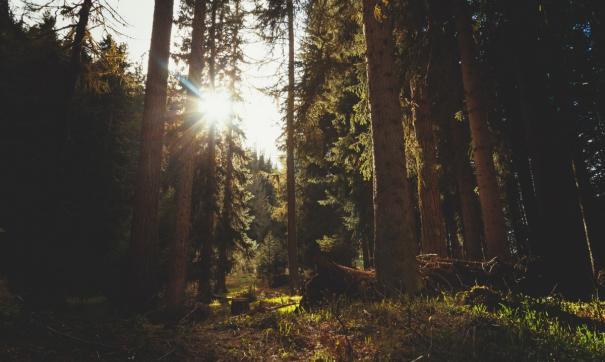 На Иркутскую область приходится 80 % всех нелегальных заготовок древесины