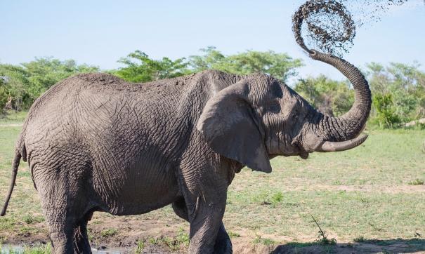 Слониха может освободиться из зоопарка