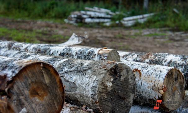 По факту уничтожения деревьев в центре города возбуждено уголовное дело