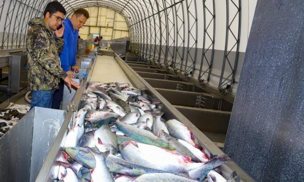 Рыбы на Дальнем Востоке становится меньше