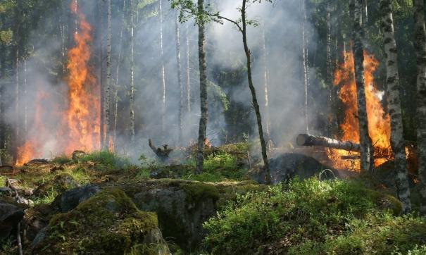 Продолжает действовать пожар площадью 32 тысячи гектаров в Катангском районе