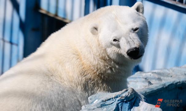 Медведица заменит умершего Умку
