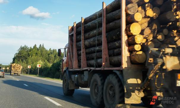 В России предложили приватизировать лес