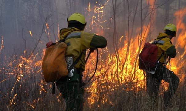Спасатели тушат лесной пожар