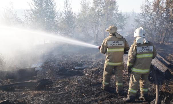В Самарской области быстро распространяется лесной пожар