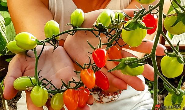 Наценку овощи получают в основном в торговых сетях