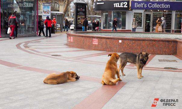 Собаки напали на женщину в Анжеро-Судженске