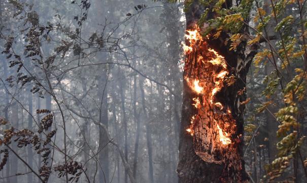 Лесные пожары на Урале