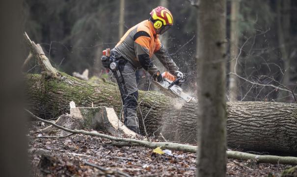 В России собираются начать вырубать все тополя в городах