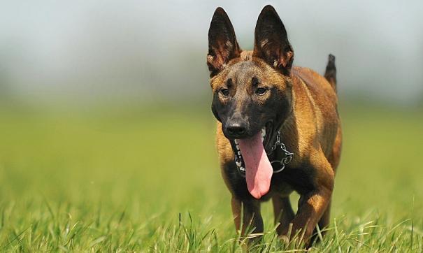 нападение бродячих собак в Кузбассе не редкость