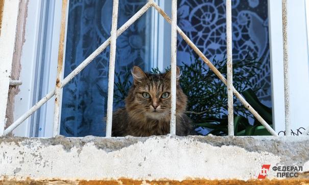Кот на продажу