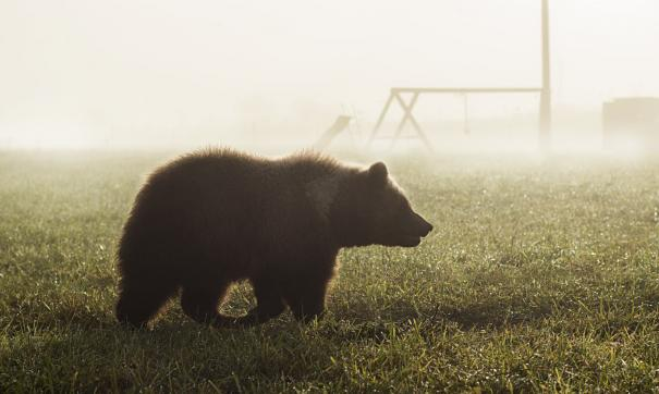 Эксперт рассказал, как избежать нападения медведя