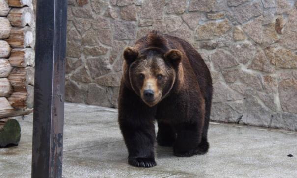 В зоопарке Челябинска насмерть отравились медведи и олени