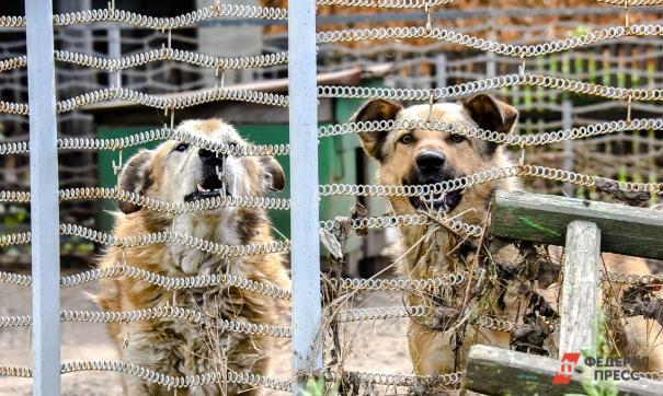 Владельцы «концлагеря для собак» решили избавиться от питомцев