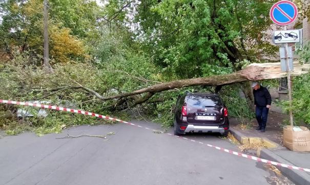 В Петербурге старые деревья начали падать на авто из-за сильного ветра