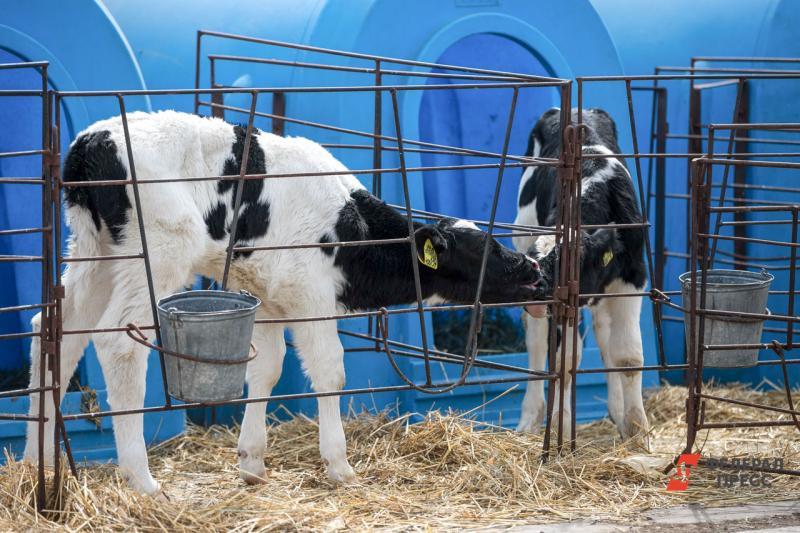 Животноводство занимает важную нишу в сельском хозяйстве региона