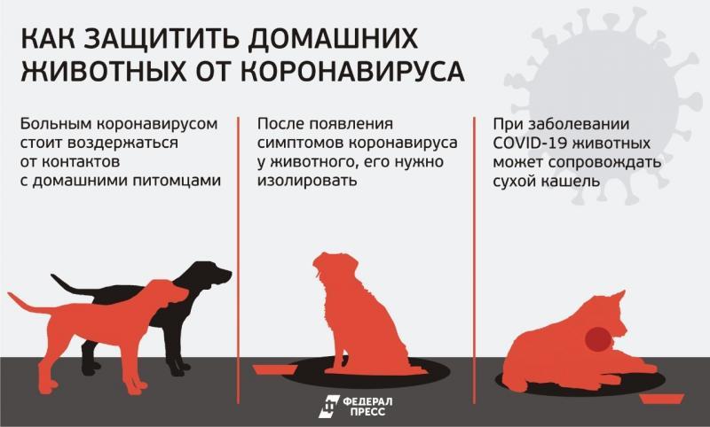 коронавирус и животные