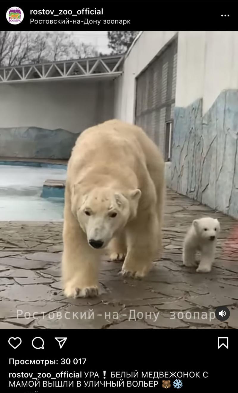 В зоопарке медвежонок вышел к посетителям
