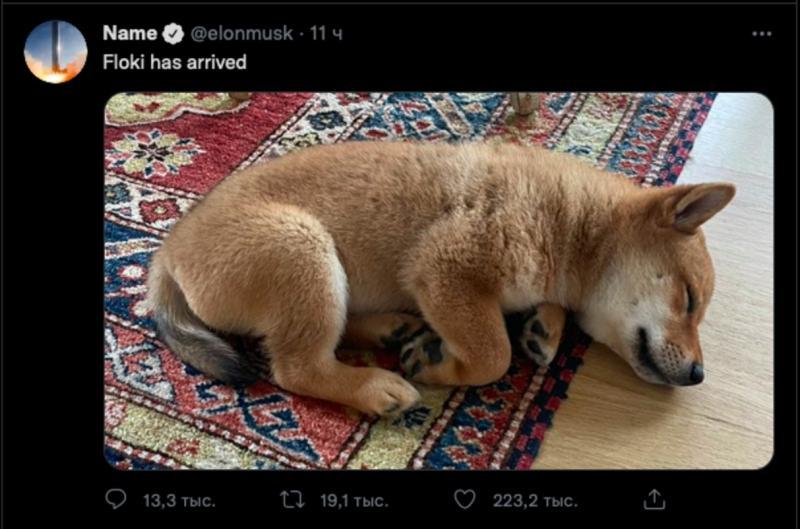 Собака Маск